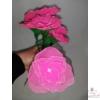 Harisnyavirág, rózsaszín színű